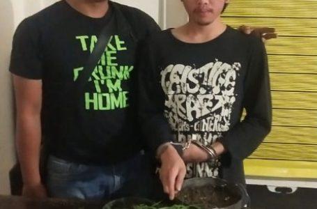 Kepergok Tanam Ganja di Belakang Rumah, Pria 19 Tahun Diboyong Polsekta Berastagi