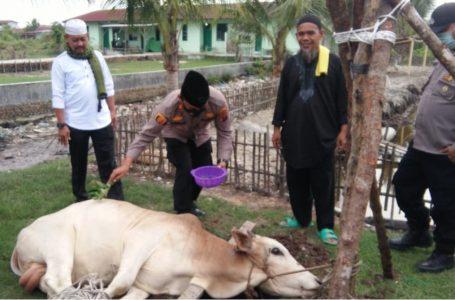 Kapolsek Kualuh Hilir Sumbang 1 Ekor Lembu di Hari Raya Idul Adha 1442 H